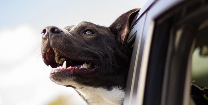 Mit dem Hund auf Reisen
