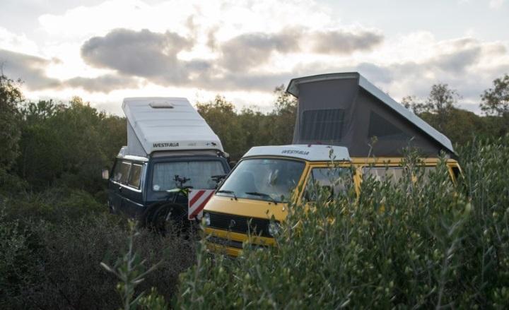 zwei-vw-camper-mit-aufstelldach-in-der-natur
