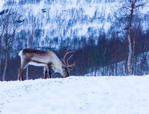 Wohnmobil Tour durch Skandinavien – das Paradies für Wild-Camper