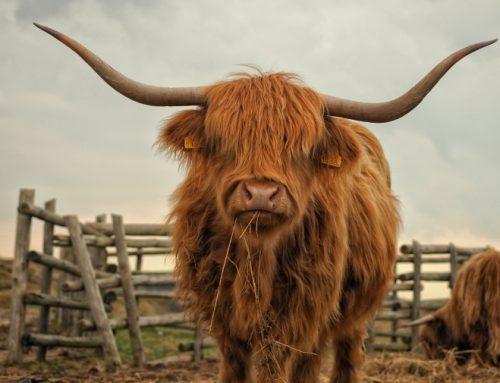 Zu Besuch im Land des Kilts: Tipps für Ihre Wohnmobil-Tour durch Schottland