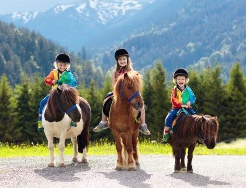 Camping auf dem Bauernhof – Ein Abenteuer für die ganze Familie