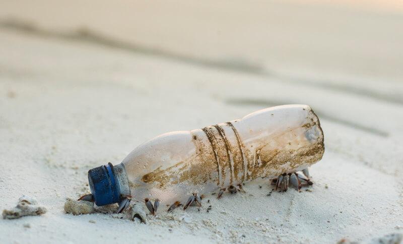Kleine Krabben unter einer Plastikflasche am Strand